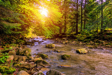 Wonderful autumn landscape. colorful leaves glowing in sunlight, over the mountain river, at sunny day in the forest