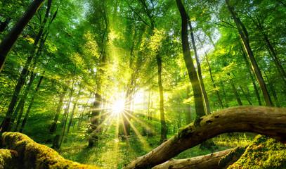 Die Sonne verzaubert den grünen Wald