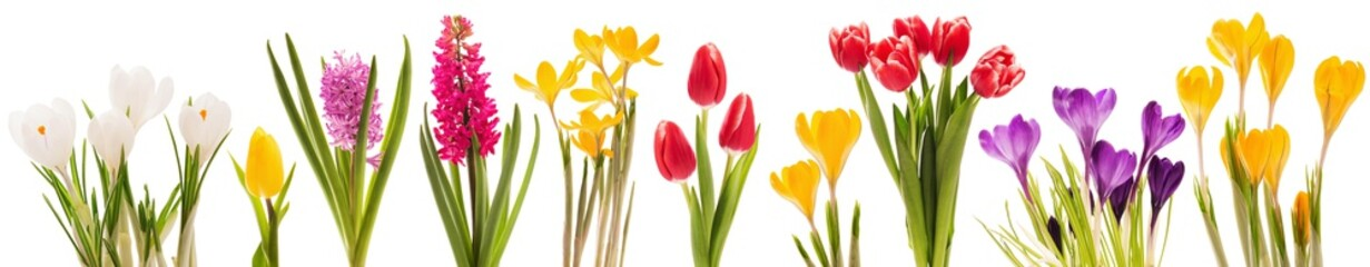 Foto op Plexiglas Tulp Spring flowers collection