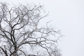 tree covered with snow against the gray sky