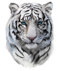 The head of the white tiger