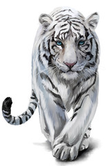 White tiger sneaks watercolor painting