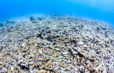 A bleached, dead coral reef