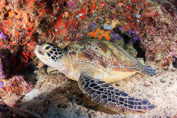 Sea turtle inside a small underwater cave