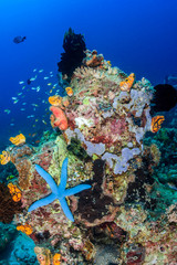 Beautiful coral pinnacle