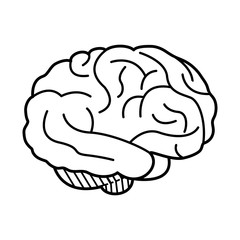 human brain icon image vector illustration design