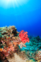 Brightly colored soft corals and sunbeams on a tropical reef