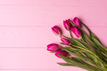Pink tulips on the pink background. Flat lay, top view.