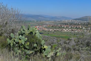 Cactus in NP Zippori, Galilee, Israel