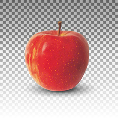 Apple fruit realistic vector isolated on transparent background