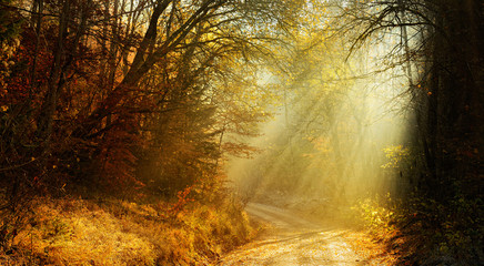 Autumn, Footpath through Forest of Deciduous Trees Illuminated by Sunbeams through Fog, Leafs Changing Colour