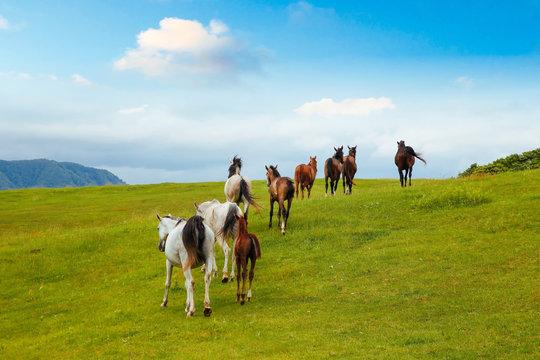 草原を走る馬