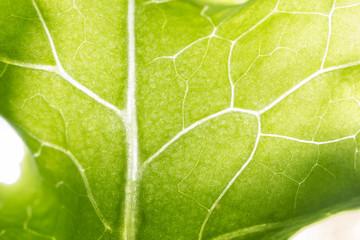 Background pattern of leaf