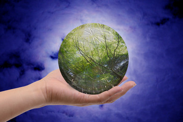 Forest in glass sphere.
