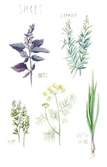 Spices (rosemary, basil, thyme, dill, green onion). Hand-drawn watercolor botanical illustration.