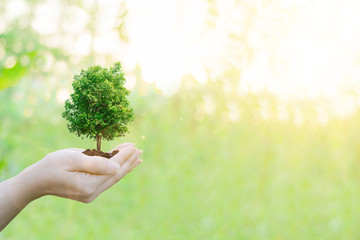 Ecology concept Human hands holding big plant tree with on blurred sunset background,World Environment Day