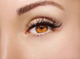 Blue Eye Makeup. Beautiful Eyes Make up detail, perfect beauty eyebrows