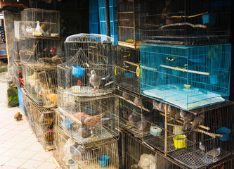 a pet shop selling various kind of birds in cage photo taken in Depok Indonesia
