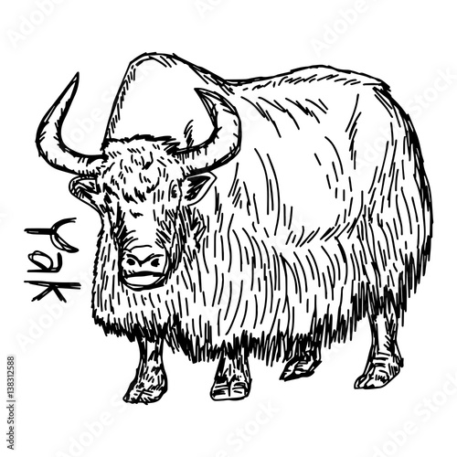 Line Drawing Yak : Quot yak vector illustration sketch hand drawn with black