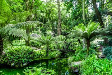 tropischer Wald Portugal
