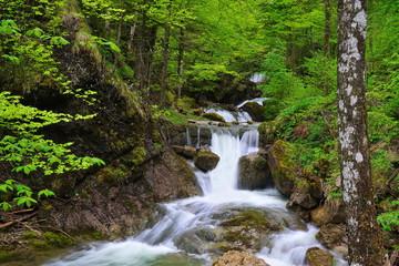 Wasserfall in Bach im Wald