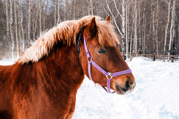 horse on pasture in the winter