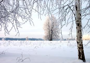 Winter frost sunset