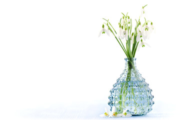 bouquet of fresh snowdrops flowers in a glass vase on white background