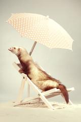 Champagne ferret lady on beach chair