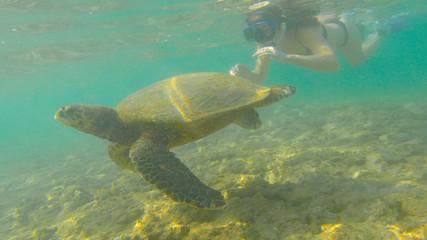 turtle & girl swimming in the ocean