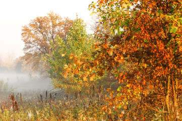 Fall forest, fog, morning, evening, bright yellow sun. Rare beautiful state prirody.the period of time between midnight and noon, especially from sunrise to noon.