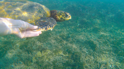 handing turtle's flipper in the ocean