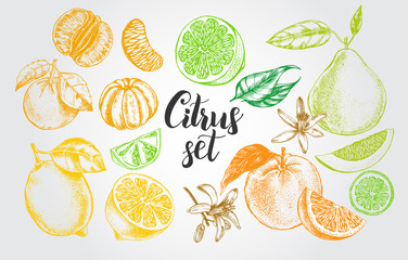 nk hand drawn set of different kinds of citrus fruits. Food elements collection for design, Vector illustration. Fototapete