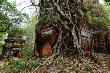 old temple in the forest