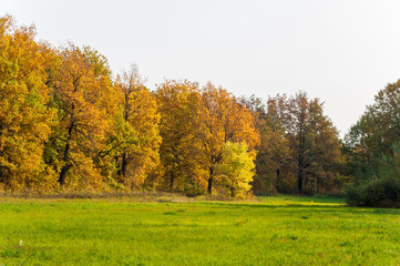 autumn mixed forest of oaks lake