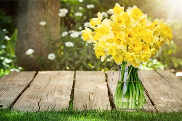 Foto op Canvas Narcis Spring.