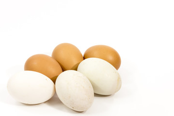 isolate egg and duck egg