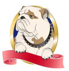 The bulldog's face in vignette