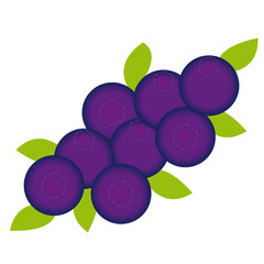 Bluberries on white background