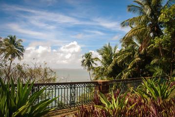 Palmtrees Tropical Islands