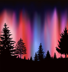 Silhouette of coniferous forest on the background of colorful sky. Evening. Northern lights. Neon presentation.
