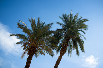 Palm trees and blue sky background