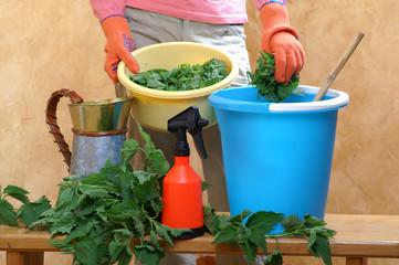Obraz Preparing an nettle extract for plants in the garden - fototapety do salonu