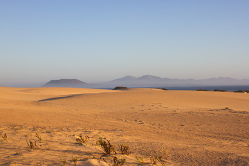 Slope hill sand on yellow dunes on blue sky background. Sunrise, morning. Sustainable ecosystem. Canary island, Fuerteventura