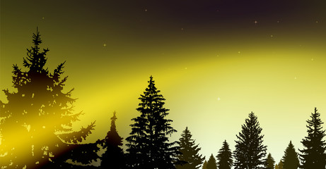 Silhouette of coniferous trees on the background of colorful sky.  Night. Northern lights. Black and yellow tones.