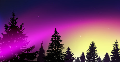 Silhouette of coniferous trees on the background of colorful sky.  Night. Northern lights. Pink and yellow tones.
