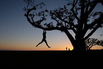 Silhouette of man dangling from tree at sunset