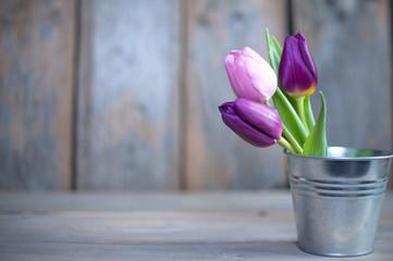 Fototapete - Spring tulips background