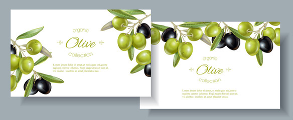 Olive horizontal banners