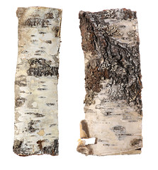 birch bark background isolated on white background.